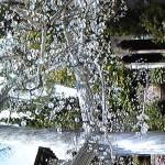 きらきら光るガラスの木々 - ガラスの森へ行ってきました!